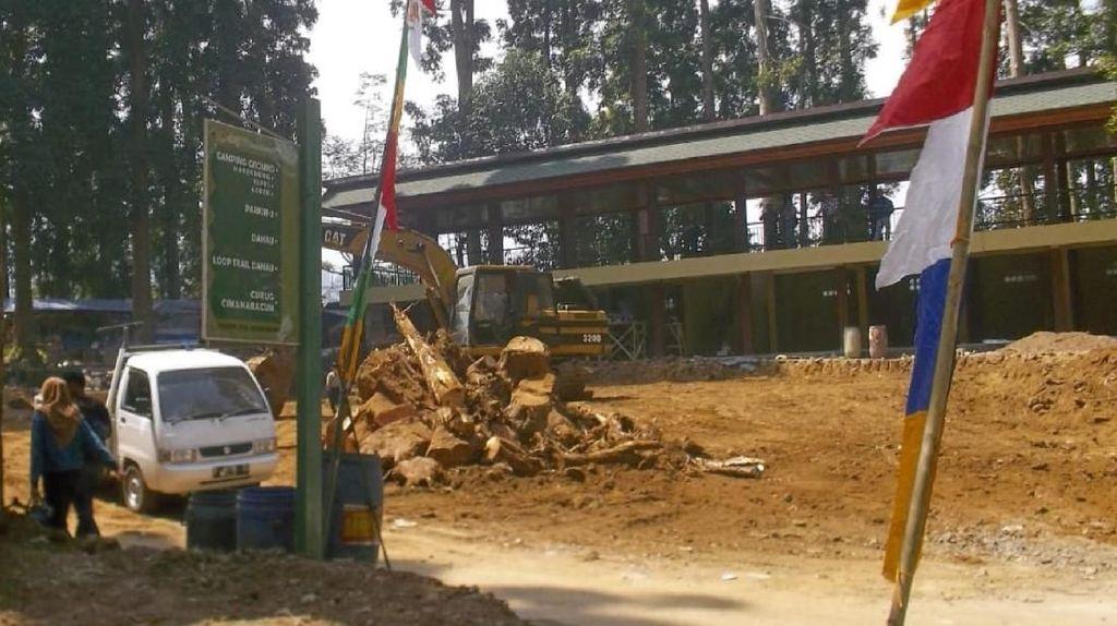 Aktivis Protes Penebangan 16 Pohon Damar di Gede Pangrango