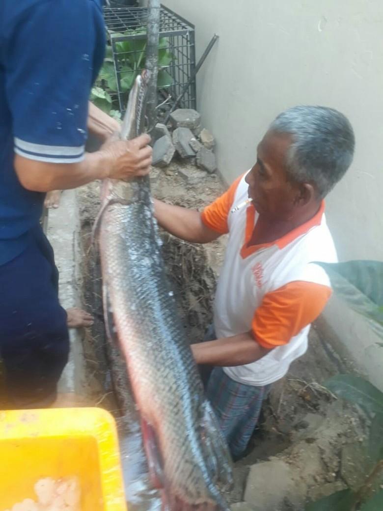 DKP Jabar Awasi Jual-Beli Ikan Aligator: Akan Kami Musnahkan