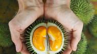 Gemas! Baby Durian yang Mungil Ini Bikin Nggak Tega Melahapnya