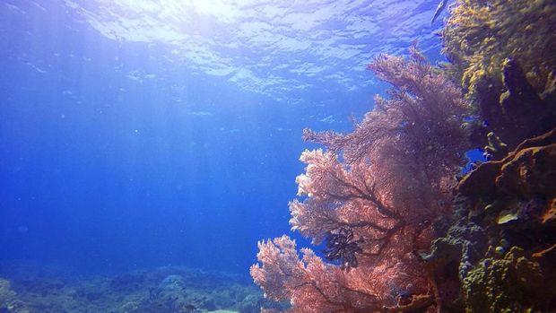 Sekelumit Kisah para Penjaga Pulau Filonga