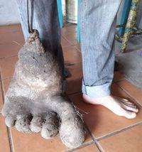 Wouw! Kentang Raksasa Ini Punya Bentuk Seperti kaki Manusia