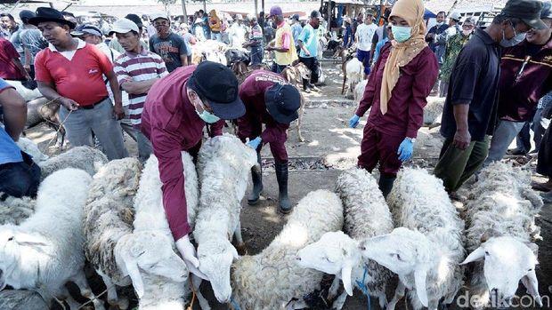 Hewan Ternak Kurban di Pasar Sapi Boyolali Mulai Diperiksa