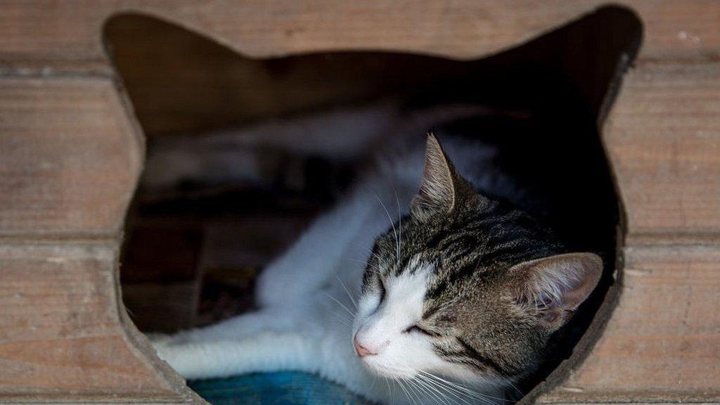 Kenyataan Rumit tentang Dengkuran Kucing