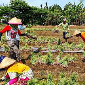 Ubah Aturan Impor, Kementan Jamin Serap Produksi Petani
