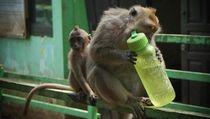 Monyet Juga Bisa Haus Banget