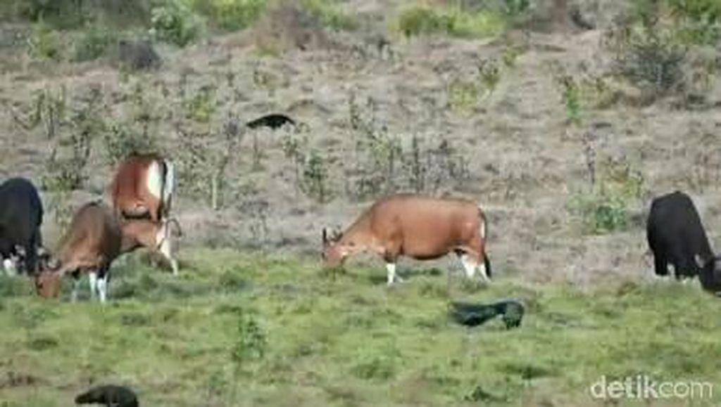 Kemenpar Terus Gali Potensi Ekowisata Banyuwangi