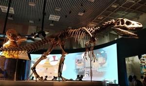 Nimba Ilmu di Museum Alam dan Sains Tokyo