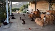 Digaji Rp 8 Juta Cuma Buat Jaga Kucing, Mau?