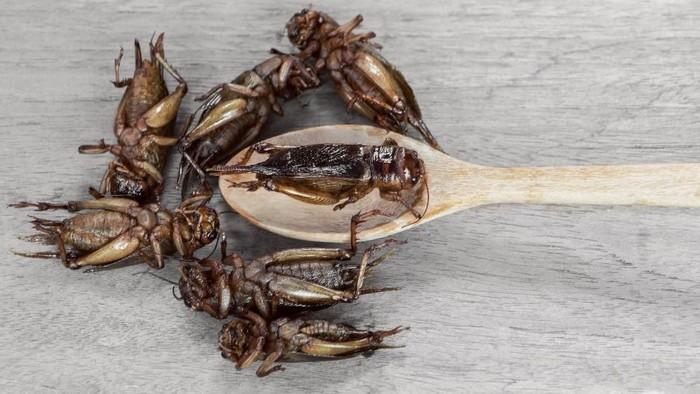 Ilustrasi olahan serangga jenis jangkrik. Foto: ilustrasi/thinkstock