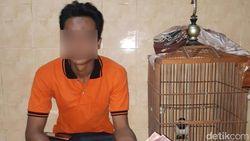 Pria Banyuwangi Ini Ditangkap Jual Jalak Suren di Medsos