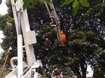 Damkar Evakuasi Sarang Tawon di Pohon di Kebayoran Baru