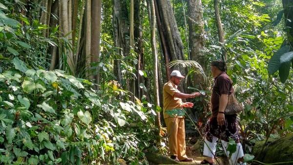 Hutan yang rimbun di Gunung Dukuh Ciamis menyimpan cerita. Terdapat mitos yang dipercayai turun-temurun (Dadang Hermansyah/detikTravel)