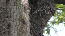 Melihat Pohon Randu Bisa Kencing di Rembang