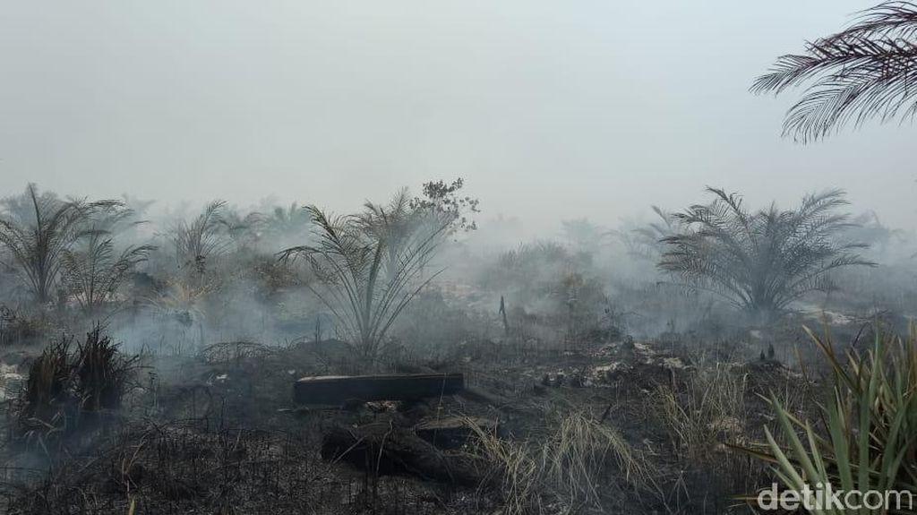Kebakaran Lahan di Riau, 20 Rumah dan Pondok Ludes