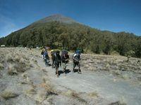 9 Fakta Menarik Gunung Semeru, Surganya Para Pendaki