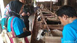 Ini Tanda Hewan Kurban di Cirebon Sehat dan Layak Dibeli