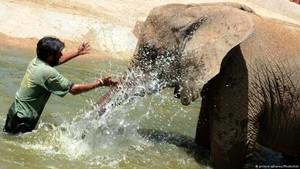 Mengapa Gajah Jarang Terkena Kanker?