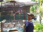Ada Permen LHK, Pedagang Burung di Yogyakarta Pun Resah