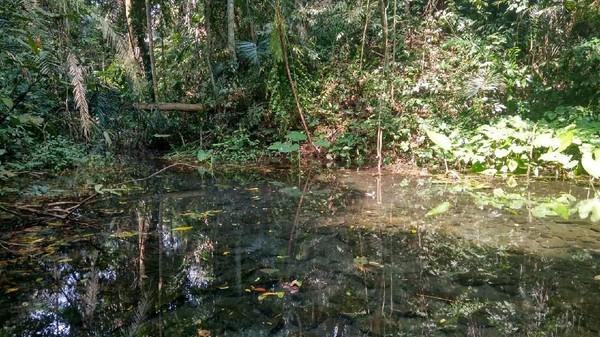 Bahkan di hutan itu terdapat sumber mata air yang melimpah, kini digunakan warga untuk keperluan sehari-hari. Hutan Gunung Dukuh sekarang ditetapkan sebagai kawasan esensial (Dadang Hermansyah/detikTravel)