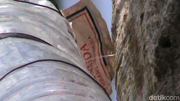 Melihat Pohon Randu Bisa 'Kencing' di Rembang