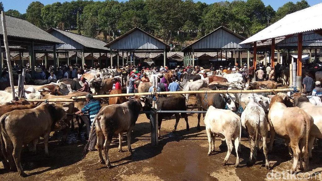 Warga Mulai Cari Hewan Kurban di Pasar Hewan Ambarawa