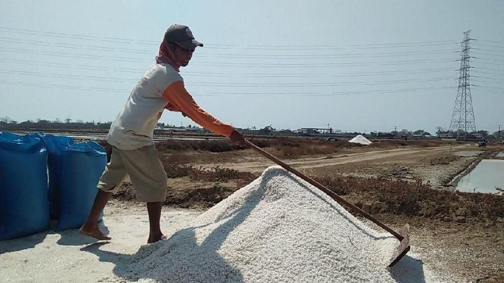 Pemerintah Bakal Jadikan NTT Sentra Produksi Garam Nasional