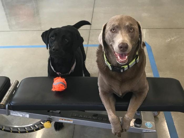 Cali dan Moolah, dua anjing setia yang selalu menemani Stone Cold Steve Austin nge-gym. (Foto:instagram/steveaustinbsr)