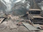 Kebakaran Lahan Sawit di Riau Hanguskan 20 Rumah, Warga Mengungsi