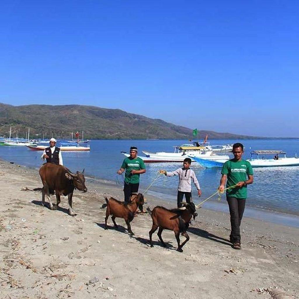 Jangan Lupa Berbagi Kurban untuk Korban Gempa di Lombok