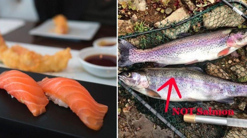 Karena Mirip Salmon, di Cina Ikan Ini Disajikan Sebagai Sashimi