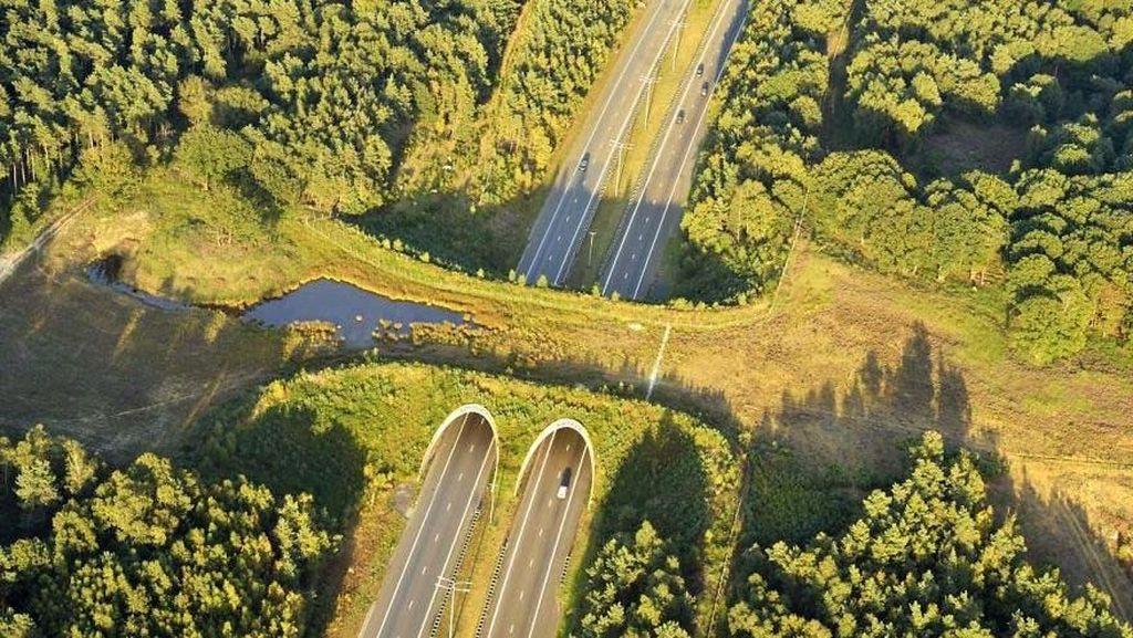 Nih Deretan Jalan yang Dibangun Khusus Hewan di Dunia