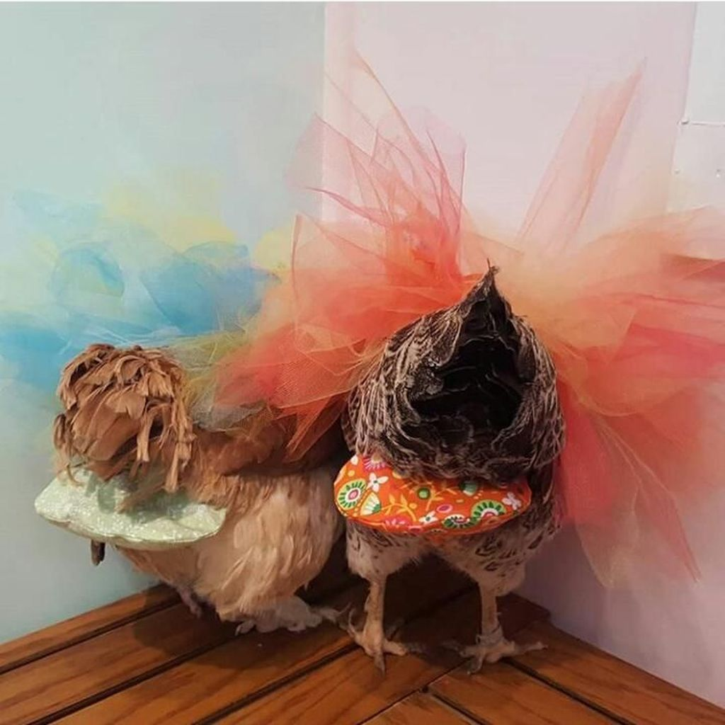 Wow! Wanita Ini Raup Rp 700 Juta Setahun dari Jualan Popok Ayam