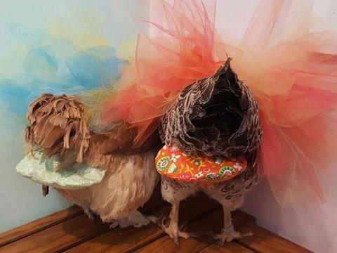Popok ayam buatan Julie Baker.