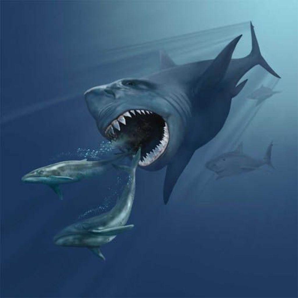Megalodon adalah hiu prasejarah yang hidup antara 15 hingga 2,6 juta tahun yang lalu. Foto: Wikipedia