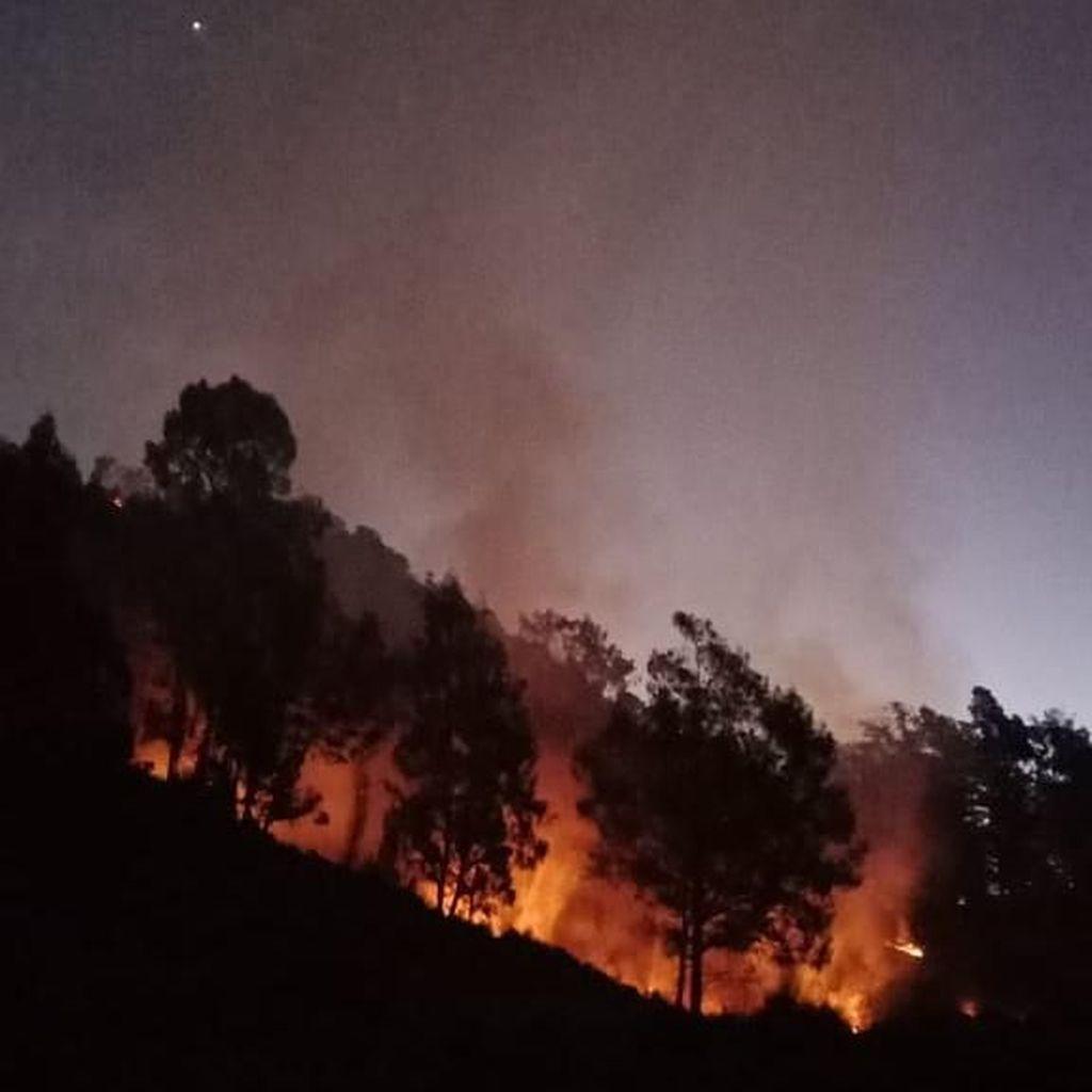 Hutan di Gunung Panderman Terbakar, Seluruh Pendaki Dievakuasi
