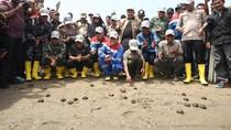 433 Tukik Dilepasliarkan dan 10 Ribu Bakau Ditanam di Aceh
