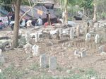 Takut Gempa, Warga Mataram Ngungsi di Kuburan
