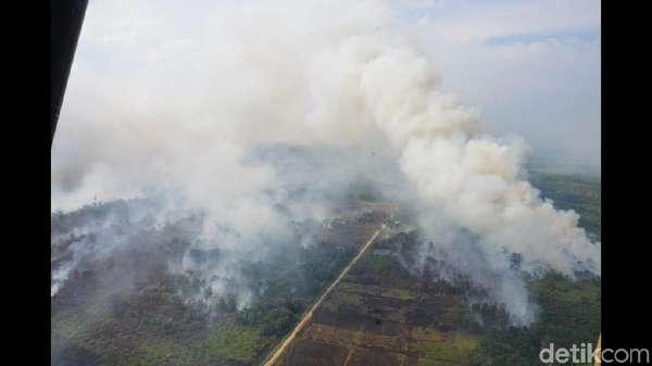Kebakaran Ribuan Hektare Hutan di Kalbar Diduga Disengaja