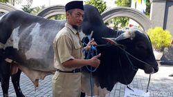 Jokowi Kurban Sapi Seberat 900 Kg untuk Warga Sleman