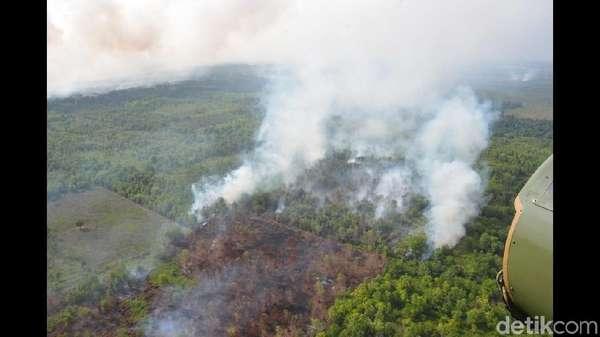 Polisi Kembali Tangkap 1 Orang Terkait Kebakaran Hutan di Kalbar