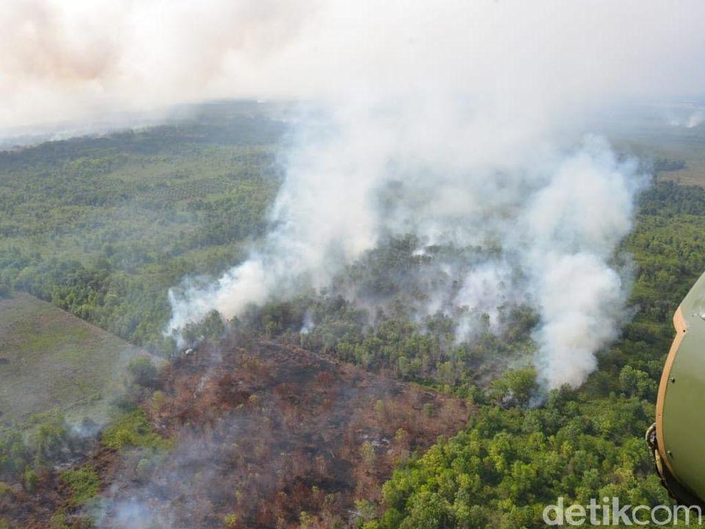 Kebakaran Hutan di Kalbar, 4 Orang Tewas