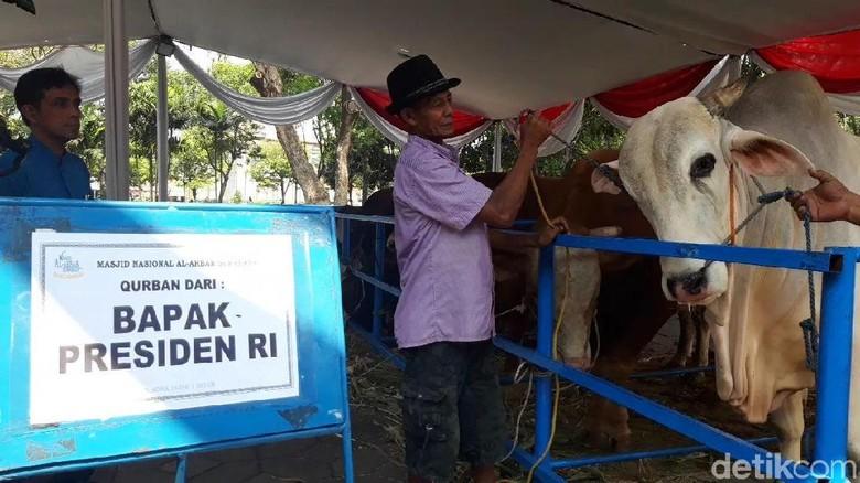 Ini Sapi Jokowi yang Dikurbankan di Surabaya, Beratnya 1 Ton