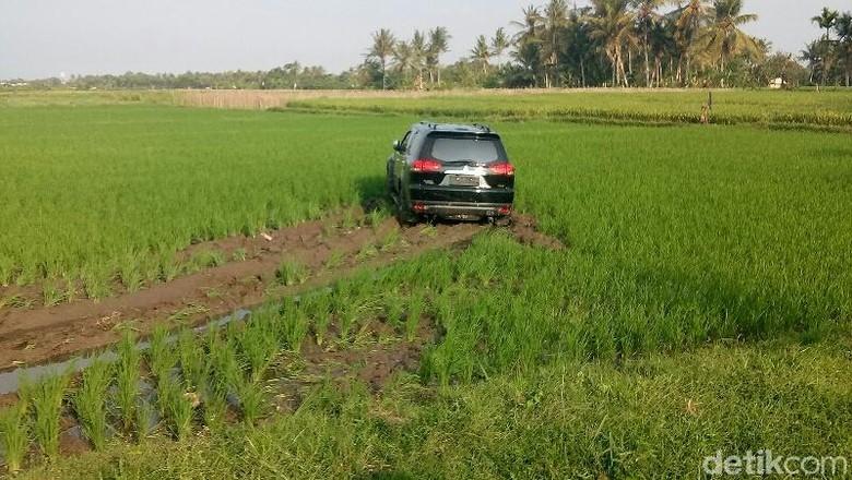 Mobilnya Nyungsep Sawah, Ini Pengakuan Anggota Dewan Banyuwangi
