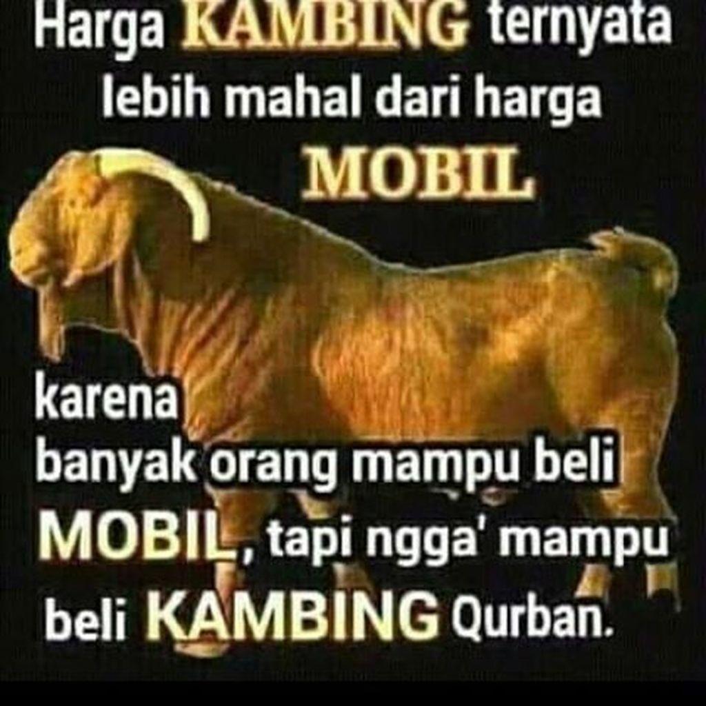 Meme Jenaka Jelang Idul Adha