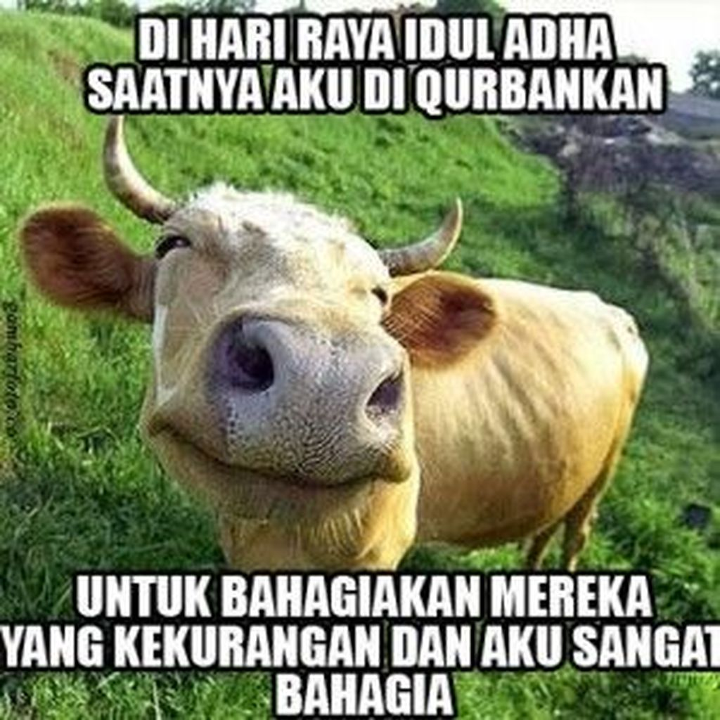 Meme Idul Adha Nusagates