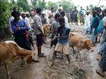 Melihat Perayaan Hari Raya Idul Adha Warga Rohingya
