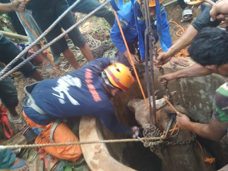 Sapi Kurban 4 Kuintal Terjatuh ke Sumur di Bandung Barat
