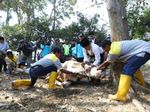 Bupati Bandung Sembelih Sendiri Dua Ekor Sapi Kurban