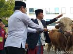 Anies Sumbang Sapi 1,2 Ton ke Masjid Balai Kota