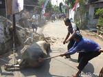 Kerbau Kurban Ngamuk Rusak Bangunan, Akhirnya Dipotong di Jalan